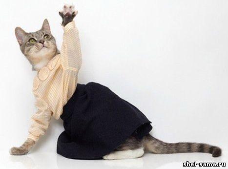 Платье на кошку сшить 12